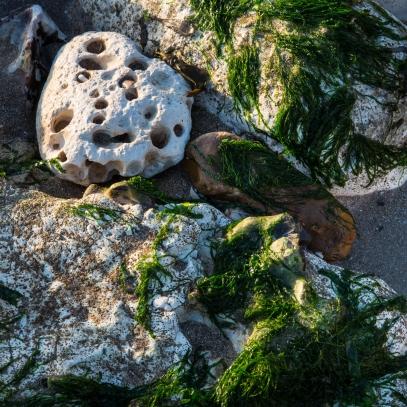 Seaweed study at low tide