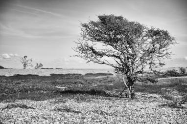 Dungeness wasteland