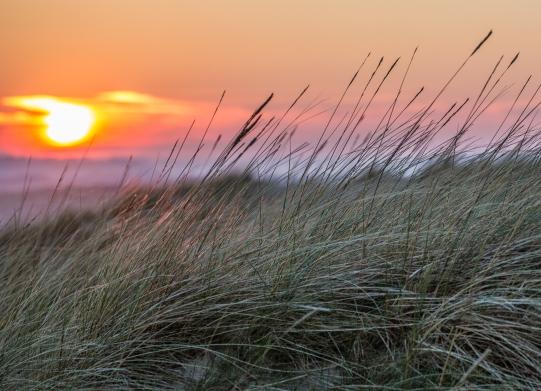 Grass at sunset, Camber Sands