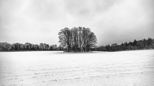 Copse in a field near Findon, Sussex