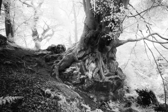 Spectral light at Nymans Woods