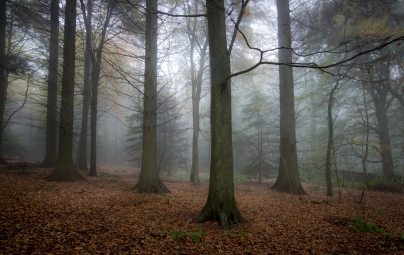Misty woodland in North Yorkshire