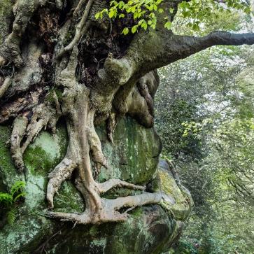 Tree on a bluff, Nymans Gardens