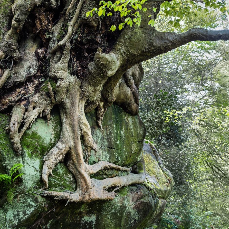 Tree on a bluff, Nyman's Gardens