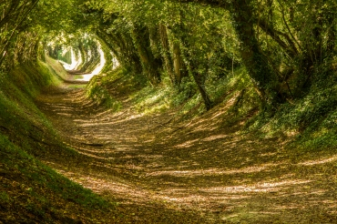 Tree tunnel in West Sussex