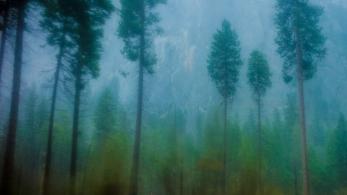 View from bus window, Yosemite in the rain